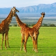 ngorongoro-conservation-area