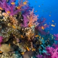diving-red-sea-2