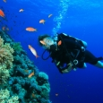 diving-red-sea