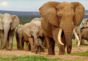Addo-Elephant-NationalPark