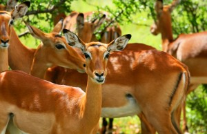 Cute Gazelles