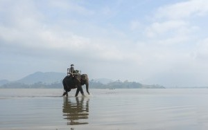 Elephant walking in the lake lak district