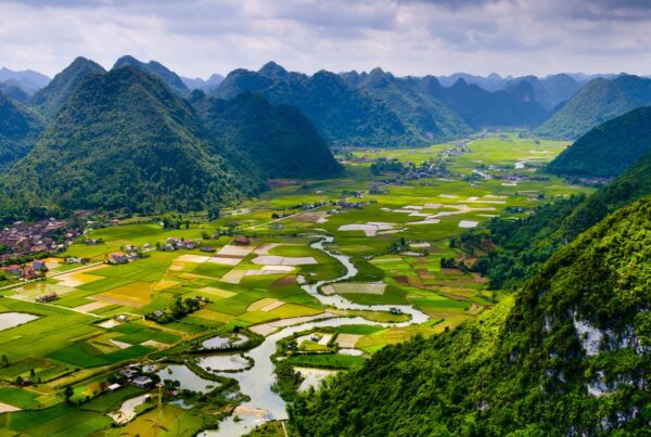 Rice field in valley in Vietnam